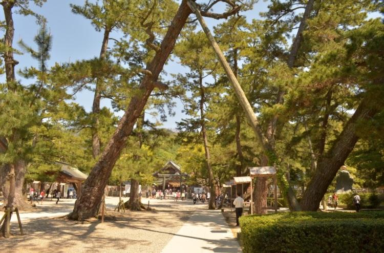 Izumo Taisha Grand Shrine - Approaching the shrine